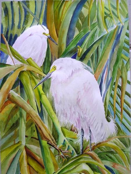 Snowy Egrets, From an Original Watercolor Painting