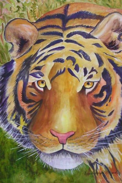 Tiger Staring at Me, From an Original Watercolor Painting