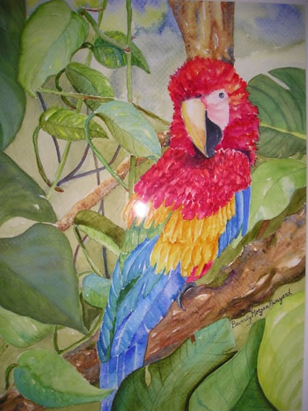 Scarlet Macaw, From an Original Watercolor Painting