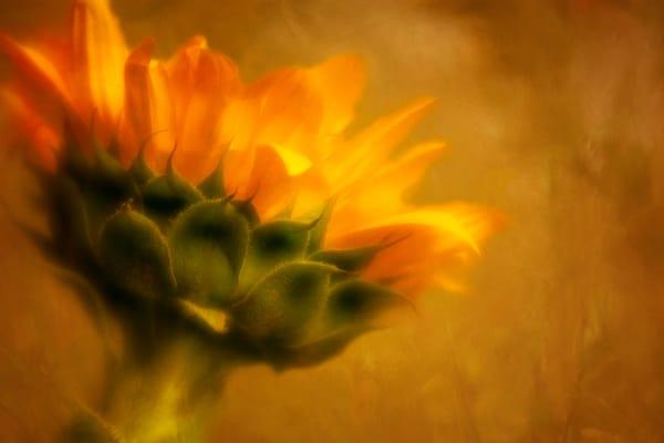 Sunny Vibes Sunflower Photographic Art Print