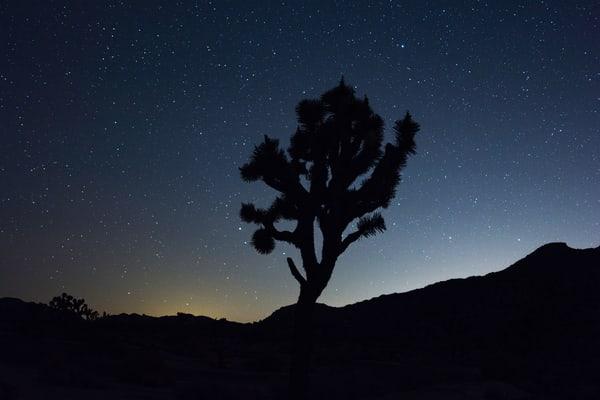 Joshua Tree under the stars