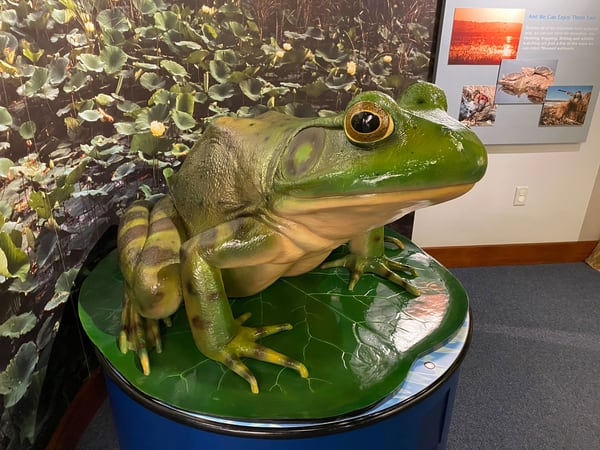 MDC frog