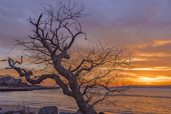 Gnarled Branches At Sunrise Art by capeanngiclee