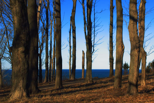 Blue Forest Art | capeanngiclee