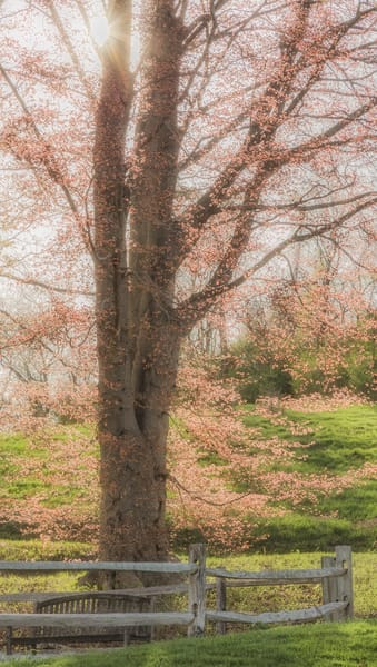 Spring  Art | capeanngiclee
