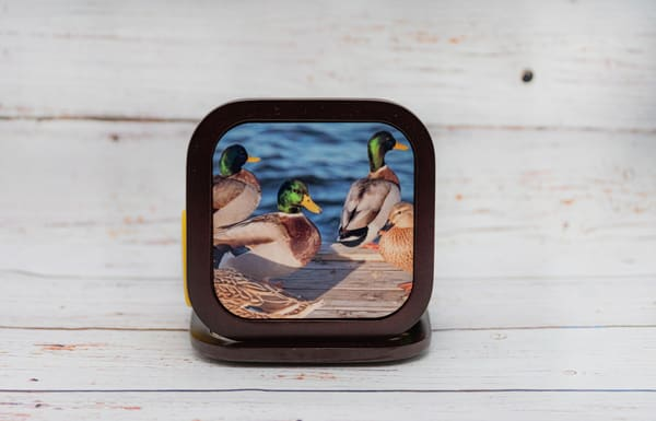 Duck Coasters | draphotography