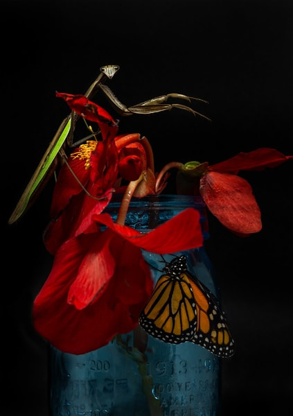 Mantis On A Jar With A Monarch Art   capeanngiclee