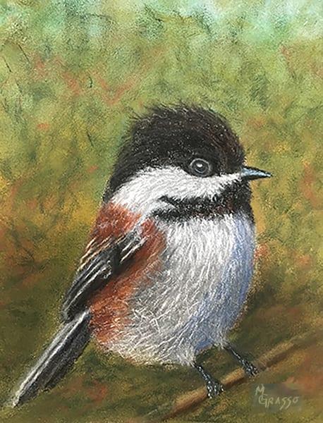 Fluffy Chickadee Art | Mark Grasso Fine Art