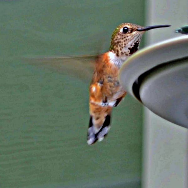 Coming In For A Landing Photography Art   KAT MILLER-PHOTO ARTIST