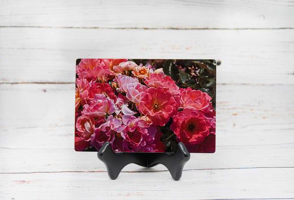 Carnation Metal Print   draphotography