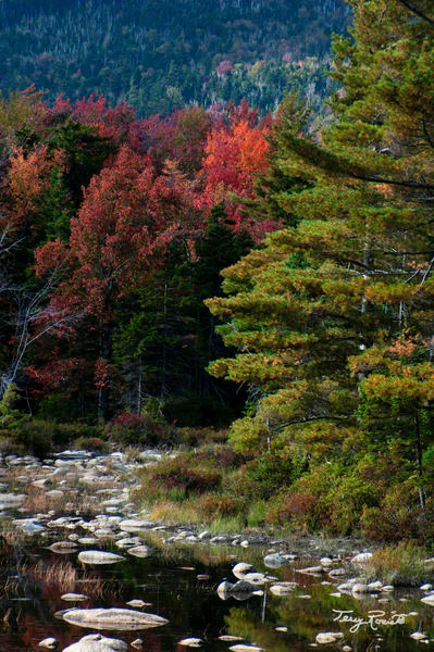 Fall's Watery Pathy in New Hampshire by Terry Rosiak