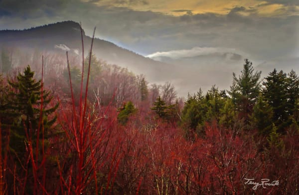 Mystical Mist Among the White Mountains by Terry Rosiak