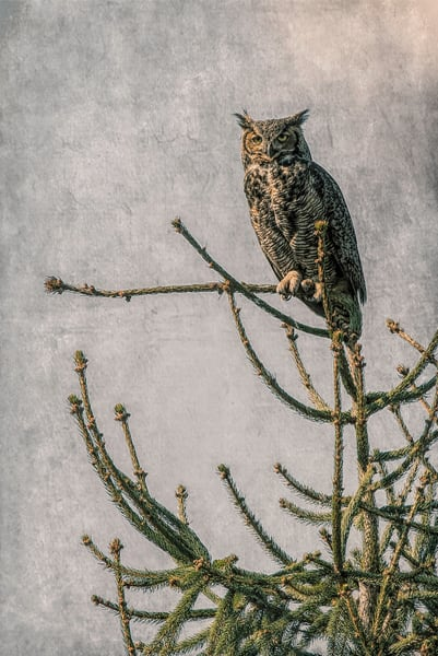 Hootie Distressed Grey  Photography Art | Pam Phillips Photography