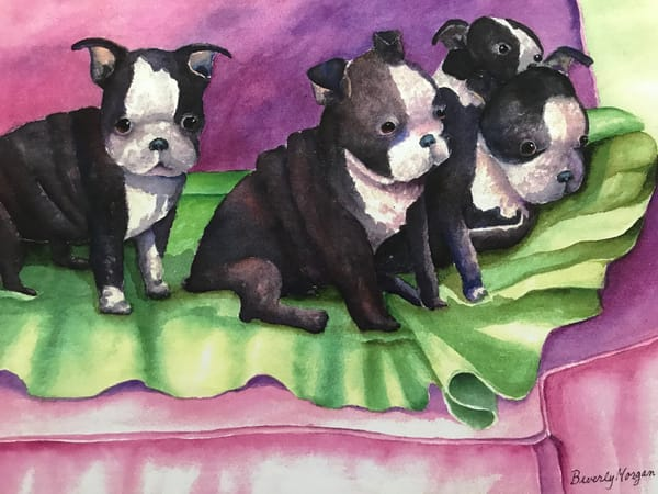 Boston Pups, From an Original Watercolor Painting