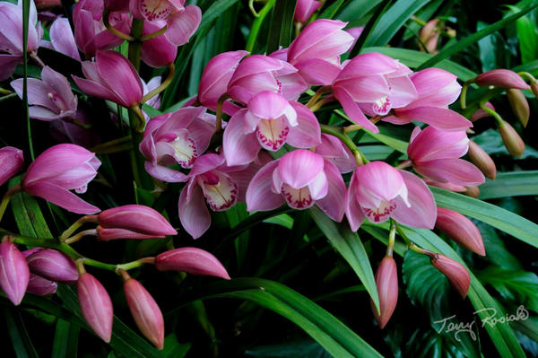 Beautiful Flowers, Longwood Gardens, Photo by Terry Rosiak