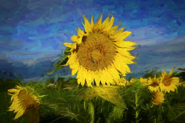 Fading Sunflowers Art | Cincy Artwork