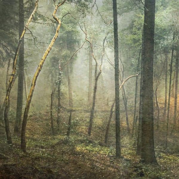 Thru The Trees Photography Art | Jae Feinberg Fine Art Photo