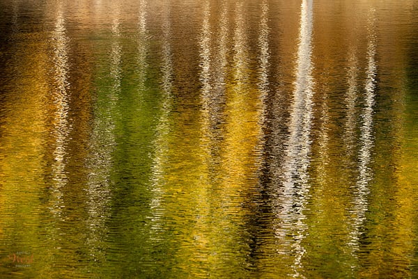 Autumn Ripples Art | David J. West Gallery