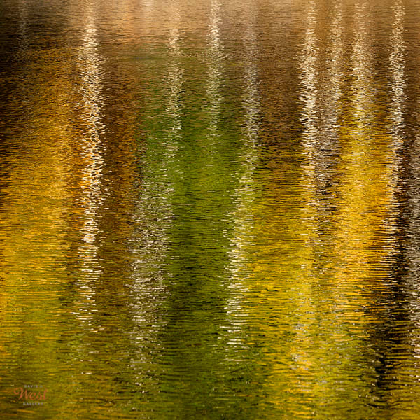 Autumn Ripples | David J. West Gallery