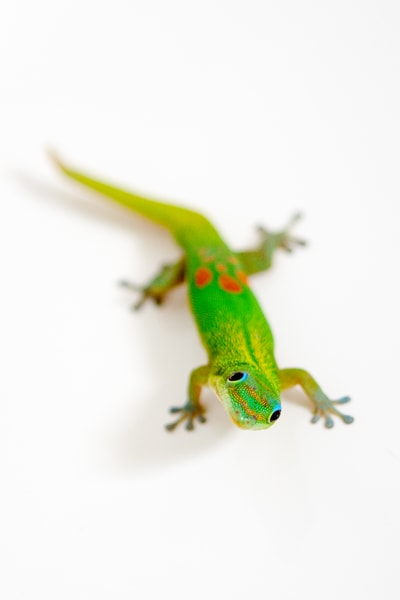 Green Gecko Photography Art | Bird In Paradise