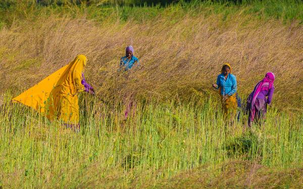 Harvest Photography Art | Robert Leaper Photography