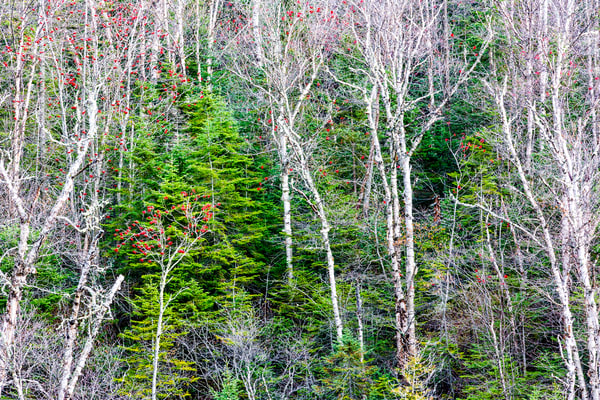 Lake Superior Forest Photography Art | Robert Leaper Photography