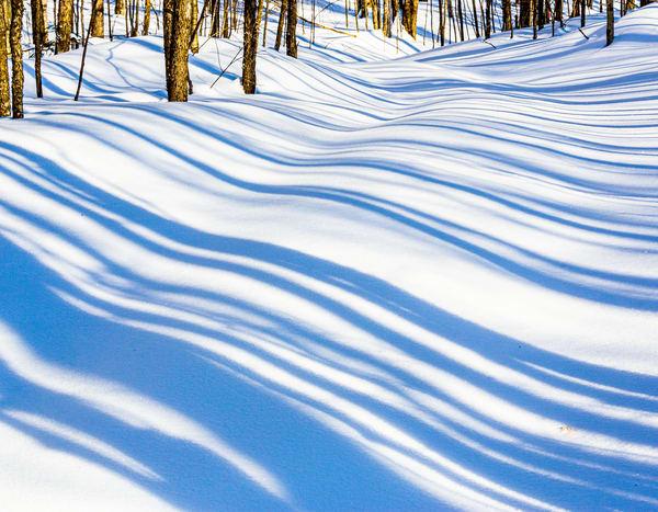 Winter Shadows, trees, Snow, Muskoka, Ontario, Canada