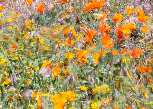 Breezy Wildflower Morning Photography Art | Josh Kimball Photography