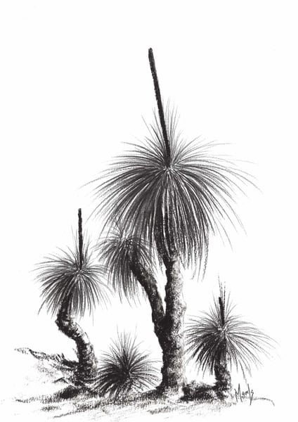 Grass Tree Study IX