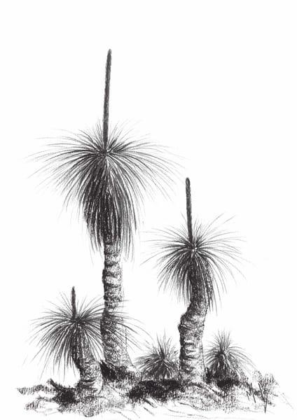 Grass Tree Study X