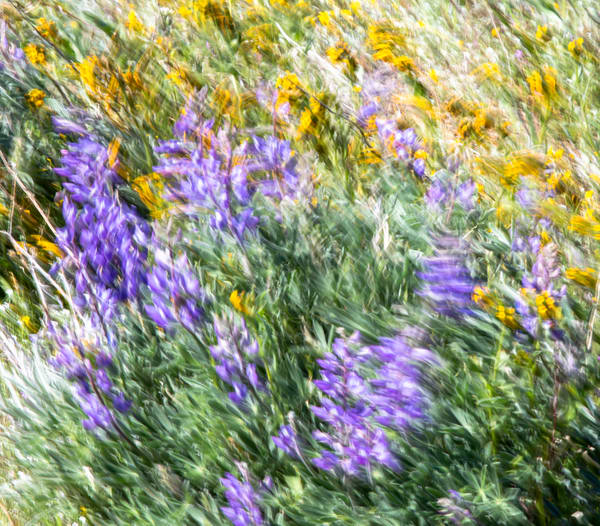 Blooming Breeze Photography Art | Josh Kimball Photography