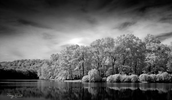 Stately - A Beautiful Infrared Image by Terry Rosiak
