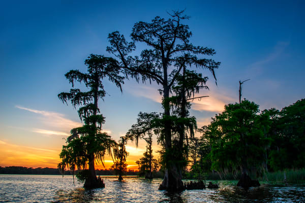 Lake Mauepas evening - Louisiana swamp fine-art photography prints
