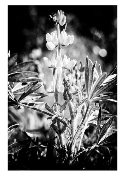 Spring Flower #1 Photography Art by Robert Vámos Photography