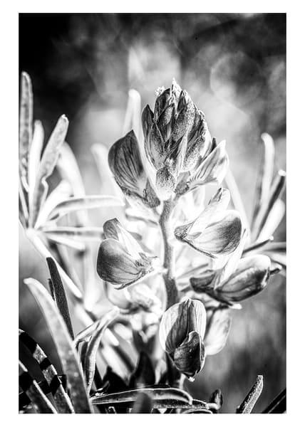 Spring Flower #3 Photography Art by Robert Vámos Photography