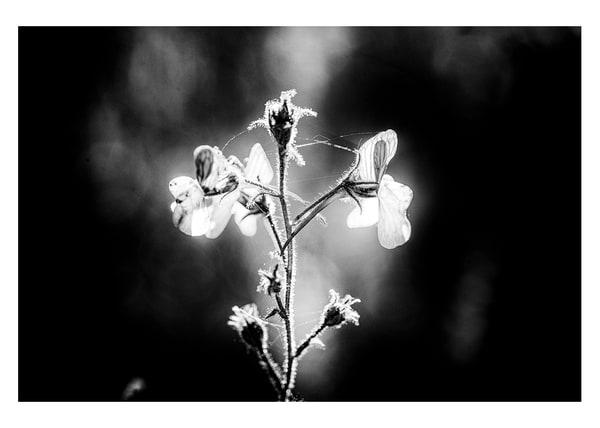Spring Flower #4 Photography Art by Robert Vámos Photography