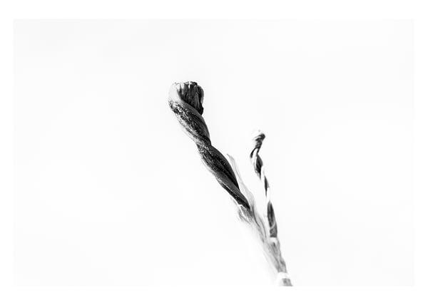 Spring Flower #5 Photography Art | Roberto Vámos Photography