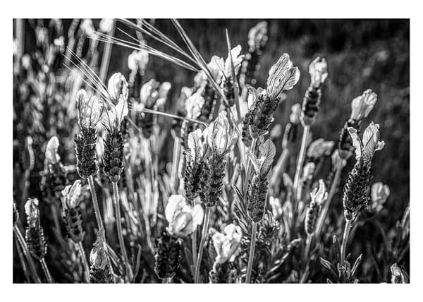 Spring Flower #6 Photography Art | Roberto Vámos Photography