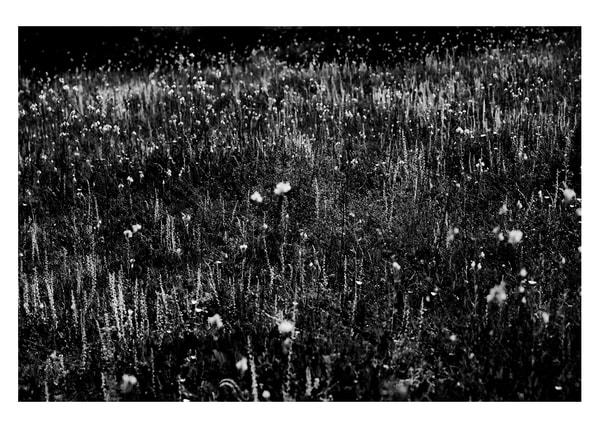 Field Of Flowers #1 Photography Art by Robert Vámos Photography