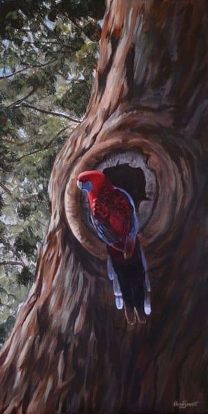Crimson Rosella - Nesting Time