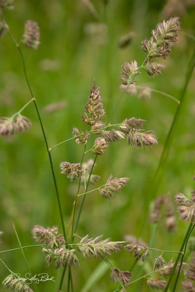 Wildflower C