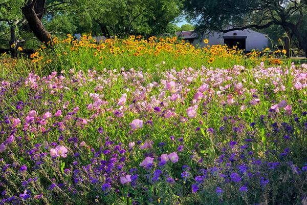 Sabino Creek Wildflowers Photography Art   Carol Brooks Parker Fine Art Photography