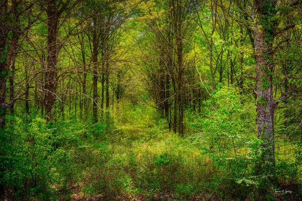 Forest, Baldwin County, Alabama, 2020 Photography Art   Thomas Wyckoff Photography
