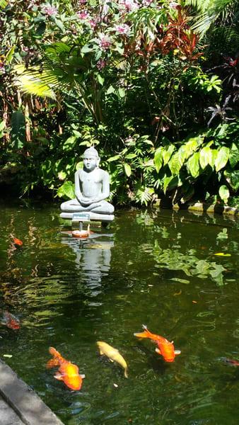 Budda In Koi Pond Photography Art | Lake LIfe Images