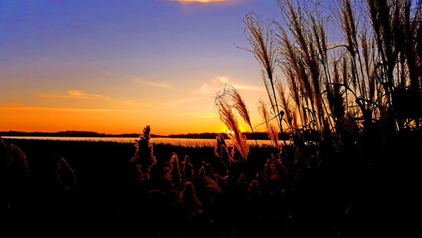 Marsh At Night Photography Art | Lake LIfe Images