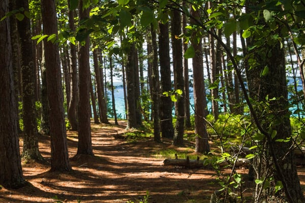 Superior Path Photography Art | Lake LIfe Images