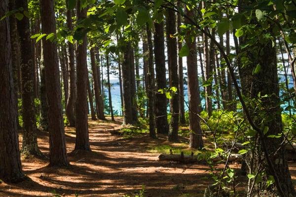 Superior Path Photography Art | Lake LIfe Images