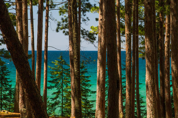 Superior Trees Photography Art | Lake LIfe Images