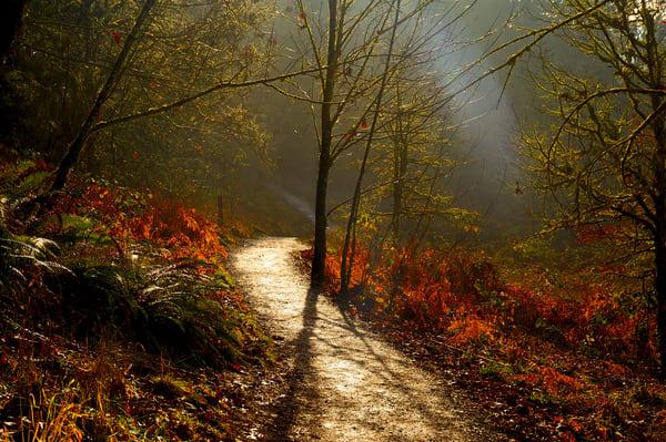 Sunlit Trail Art | Shaun McGrath Photography