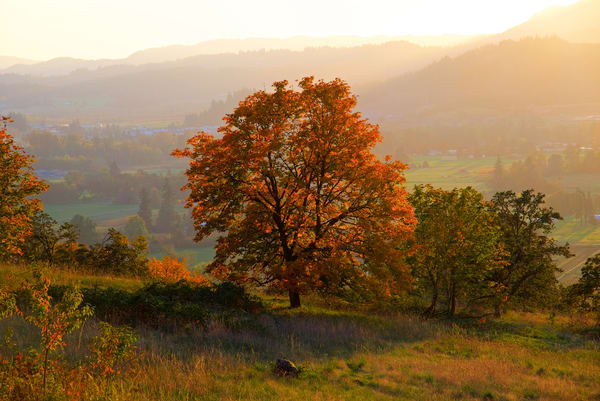 Fall Tree On Mt Pisgah Art | Shaun McGrath Photography